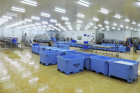 Flowcrete Coats Penver Products' Hi-Tech Seafood Processing Plant